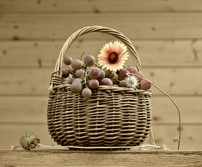 Basket with grapes and flower in retro still life