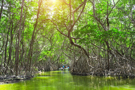 People boating in mangrove forest, Ria Celestun lake, Mexico