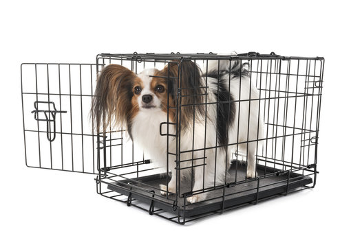 little dog in cage