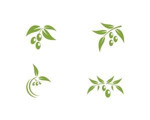 Set of Olive logo Template