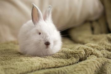 Cute fluffy rabbit on plaid Wall mural