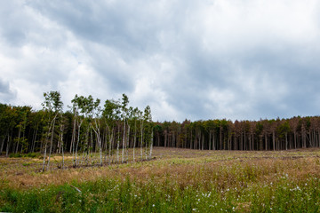 Trees before cut in front of a meadow on a hill with dramatic sky before the storm. Protect our environment concept.