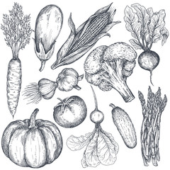 Set of hand drawn vector farm vegetables in sketch style.