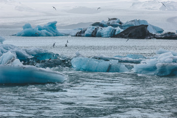 seagulls flying over beautiful glacier ice pieces floating in lake in Jokulsarlon, Iceland