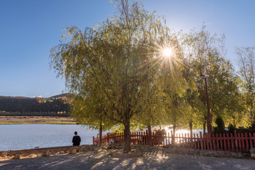 A tourist sitting on wooden bench beside a lake under Liu tree toward the sun in clear blue sky day