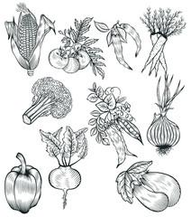 Vegetables top view. Organic food poster frame.Vintage retro food images. Farmers market menu design.