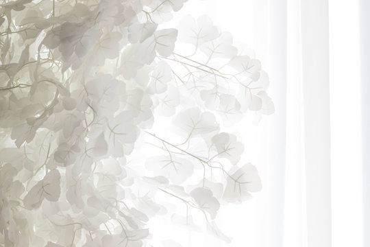 White leaves against a white curtain background mid