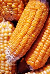 Yellow ripe corn, close up organic macro texture background, top view