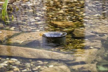 Oberflächen-Absauger (Skimmer) in einem Schwimmteich in Aktion