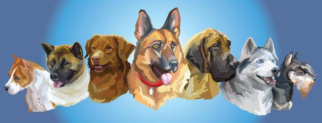Big and small dog breeds panorama2