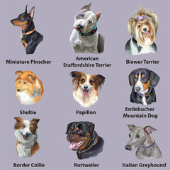 Set of portraits of dog breeds-2