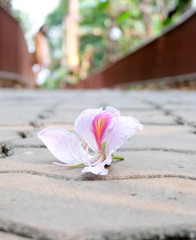 Nature creates beautiful things./Pink flower/flower/footpath/Nature