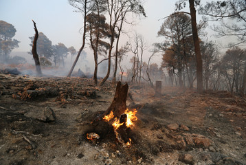A tree burns near the city of Orebic