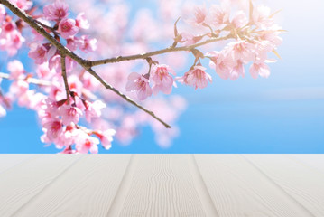 Sakura blossoms, closeup view. Natural pink color and the background Bokeh and wood flooring, natural light.