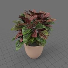 Bushy house plant