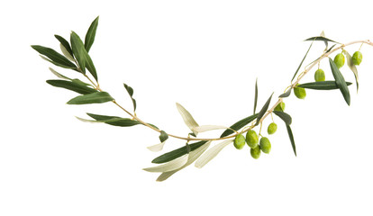 fresh olives with leaves isolated