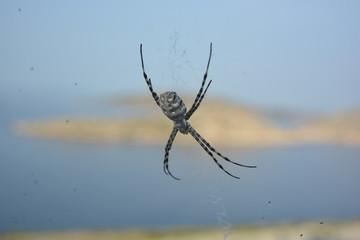 ragno con la sua ragnatela
