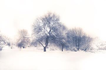 Winter season landscape white snow field forest trees white sky in soft blue purple colors