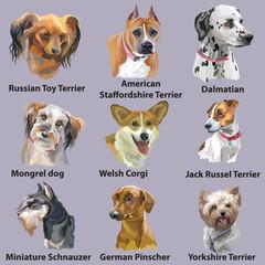 Set of portraits of dog breeds-3