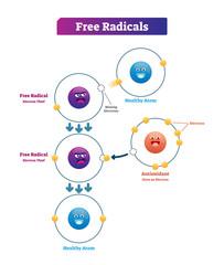 Free radicals, antioxidant and healthy atom explanation vector illustration diagram