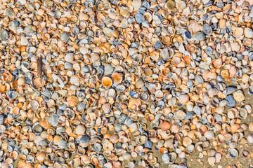Background of small multicolored seashells