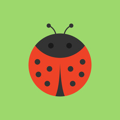 Cute ladybird round vector graphic icon. Black and red ladybug beetle, insect animal head, body illustration. Isolated on green background.