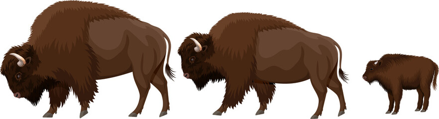 vector family of brown zubr buffalo bisons with kid