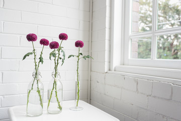 Purple pom pom chrysanthemum flowers in glass bottles on small white table next to window (selective focus)