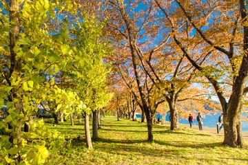Colourful maple leaf in autumn season. Japan autumn with famous festival on Leaf of maple Colour change.