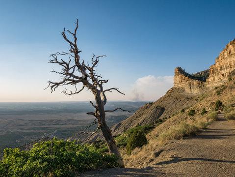 Dead Tree near Mesa Verde National Park, Cortez, Colorado