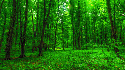 Brightly green forest