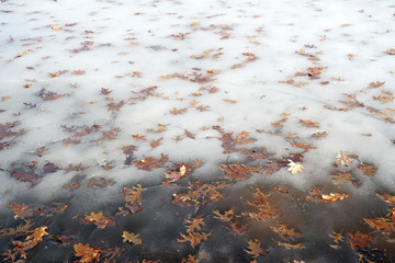 Yellow leaves frozen in the ice in the lake