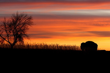 Silhouette of bison and tree at sunset - North Dakota