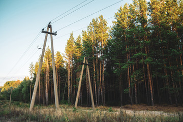 Power lines in glade along conifer trees in sunlight. Poles with wires near dirt road among tall pines. Electricity poles close up in coniferous forest with copy space. Sunny crowns of pinery.