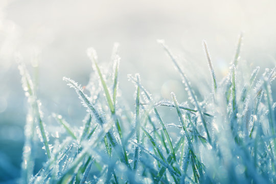 Grass in the frost. Frost on the grass in the morning sun.Winter natural plant background in cold blue tones.  Grass background in  pastel colors.November and December. Late Autumn. Winter time