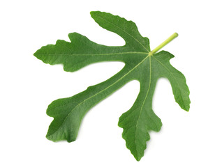 Fig leaf isolated on white background. top view