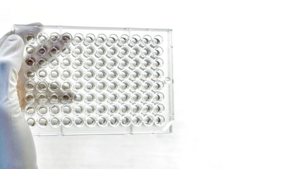Closeup image of Screening the cell cytotoxicity by MTT assay in microtiter plate. Mtt is used to study the cell viability measure of cellular activity as an indicator of cell damage or cytotoxicity w