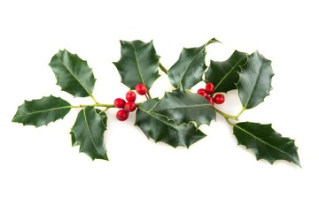 Sprig of Christmas Holly