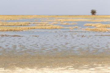 Makgadikgadi Pans National Park expansive landscape