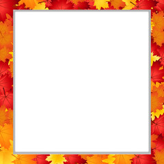 Vector square photo frame with fallen autumn maple leaves on white background with copy space