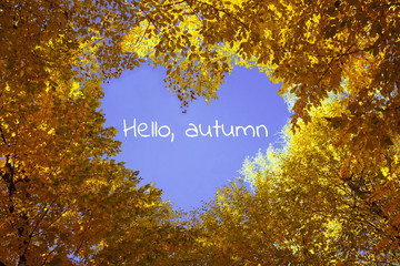 Heart from autumn leaves with blue sky on background