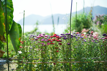 彩り豊かな花