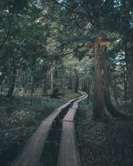 奥日光 戦場ヶ原の木道