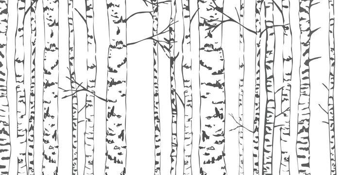 Birch trees sketch