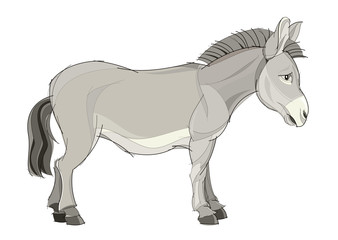 Fantasy illustration of cute domestic donkey on white background. Hand-drawn vector image.