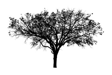 black tree silhouettes isolated on white background , silhouette of trees,dead tree from thailand