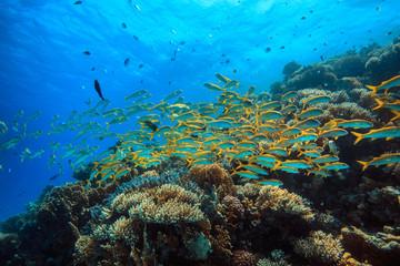 Yellow fish in coral reef underwater garden