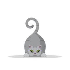 Cute domestic cat.
