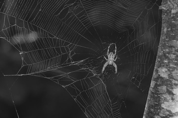 A spider entwined in its web.