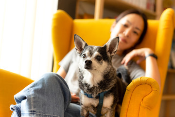 Woman sitting on a yellow couch with black chihuahua dog looking